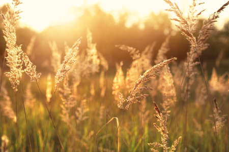 Idyllische heißen Sommermorgen auf dem Feld Standard-Bild - 31721196
