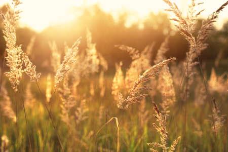Idyllische hete zomer 's morgens op het veld Stockfoto