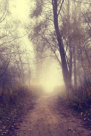 Misty autumn road in the forest photo