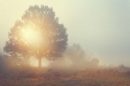 Amazing view of foggy morning - lonely tree on a glade photo