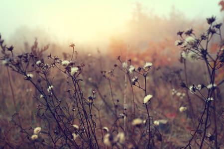 Light autumn wind on a wild glade