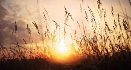 golden sunset on a wild meadow photo
