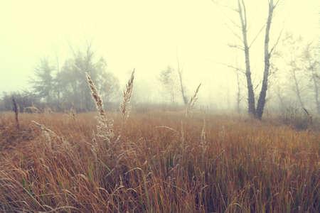 Wild hazy landscape view photo