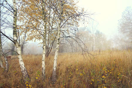 Young birch trees in the picturesque wild landscape photo
