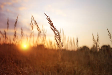 wild sunny landscape view photo