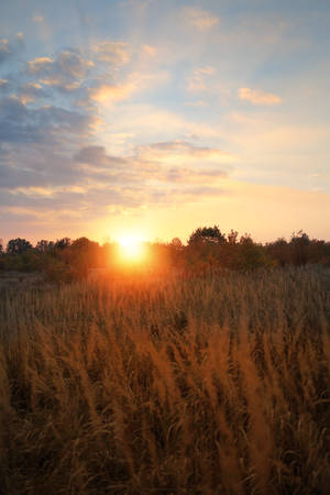 non urban: Sunny end of a day on the field