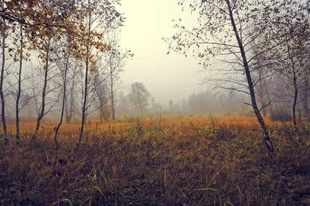 idyllic: colorful idyllic landscape Stock Photo
