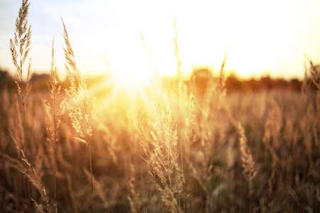 Sunny summer field photo