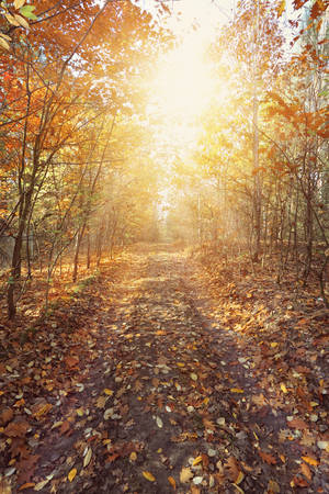 exceptionally: Autumn forest path in beautiful sunny day Stock Photo