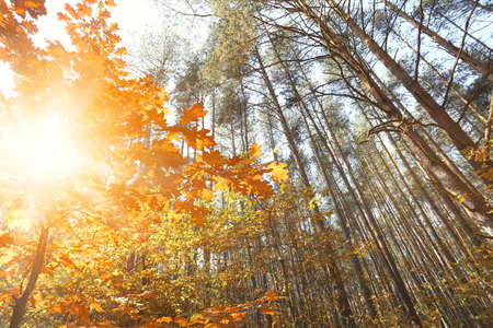 exceptionally: Sunny autumn forest