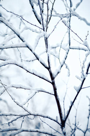 twig: snow-covered and frozen twig Stock Photo
