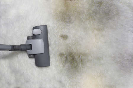 saprophyte: vacuuming very dirty and muddy carpet Stock Photo
