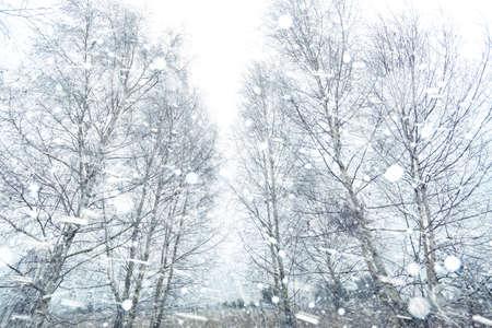 precipitacion: Zonas rurales de nieve helada mañana