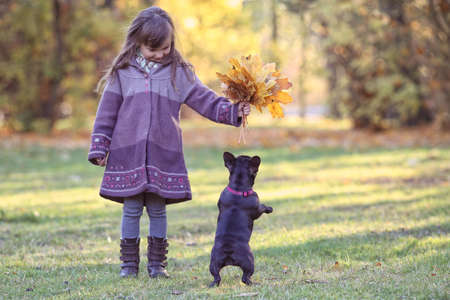 French bulldog with a little girl have fun