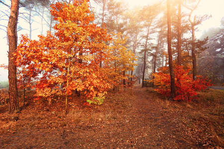 colorful autumn colorful forest Stock Photo