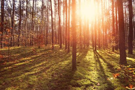 sunny forest background Reklamní fotografie