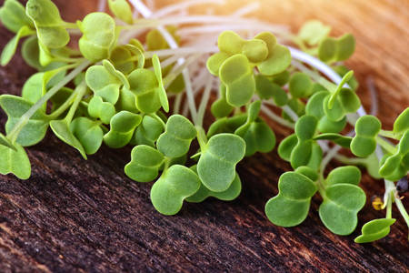 green and healthy microgreens on a wooden board