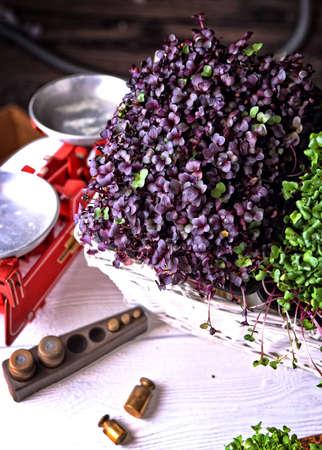 healthy and fresh micro greens sprouts Archivio Fotografico