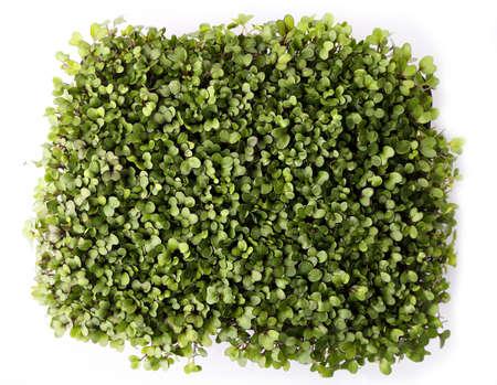 microgreens e germogli sani su sfondo bianco