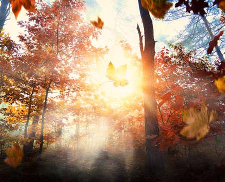 Mglisty i jesienny poranek w lesie