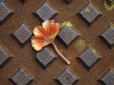 contrast between delicate red leaf on rusty metal plate