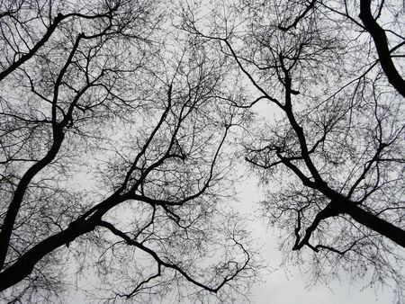 Trees with dead branches are silhouetted against the gray sky Stock Photo