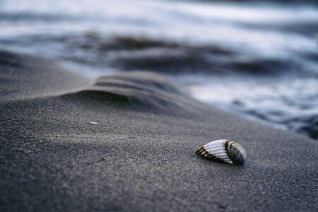 ホリデイ ・ コンセプト、海とビーチのシェル