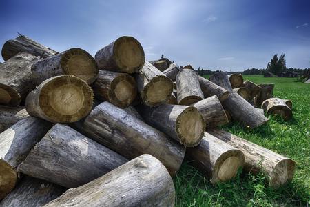 杭木、製材、緑の美しい青い空の下で 写真素材