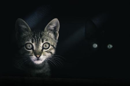 暗闇の中で神秘的な猫目