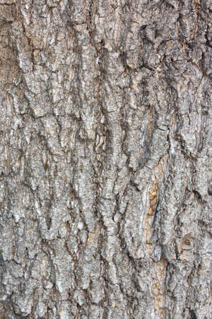 The relief texture of the brown bark of the tree in outgrowths and cracks close-up as a background. The bark of the tree is brown. Creative vintage background. Detail Shot Of Tree Trunk. Pinewood 免版税图像