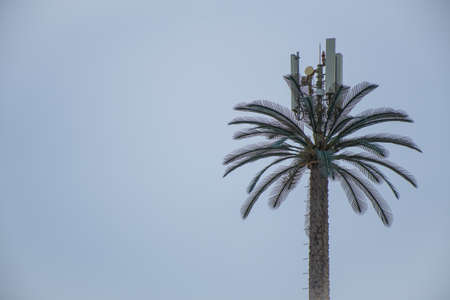 A cellular mobile coverage tower   in the shape of a date palm against a blue sky