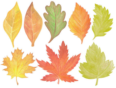 Set of watercolor autumn hand painted leaves