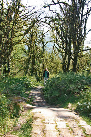 photo of a girl, walking along the trail path, through Dead boxwood forest to Mirveti Waterfall in the mountains of Georgia at sunny day, in spring.
