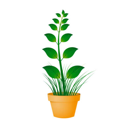 Illustration of flower pot Vector