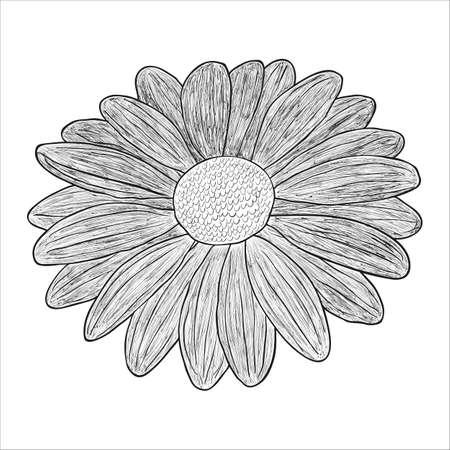 wallpape: Vector black and white illustration of a flower. Illustration