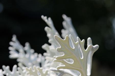minutiae: White light green plant like a fairy tale