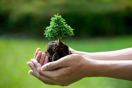 environmental protection: hands holding a small tree Stock Photo