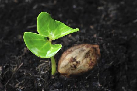 young plant growing from seed photo