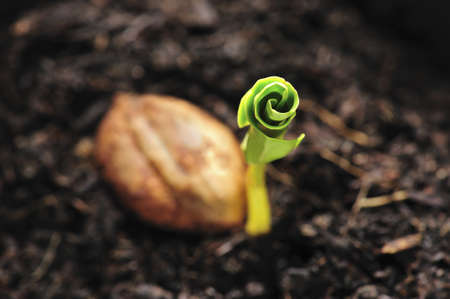 Green sprout growing from seed photo