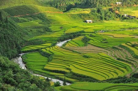 gradas: terrazas de arroz de Sapa, Vietnam