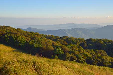 plentiful: plentiful forest  ( landscape north of Thailand)