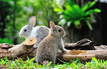 conejo: Dos conejos de conejito en el jard�n