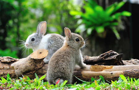 Twee konijnen konijntje in de tuin