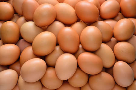 chicken egg: Group of eggs