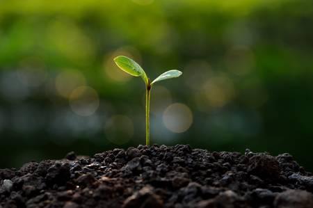 jonge plant op groene bokeh achtergrond Stockfoto