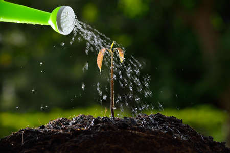Pouring a young plant from a watering can