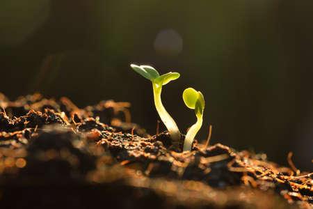 Grüne Sämling wächst aus der Erde im Sonnenschein Lizenzfreie Bilder