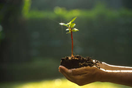 hands holding tree: Hands holding a small tree