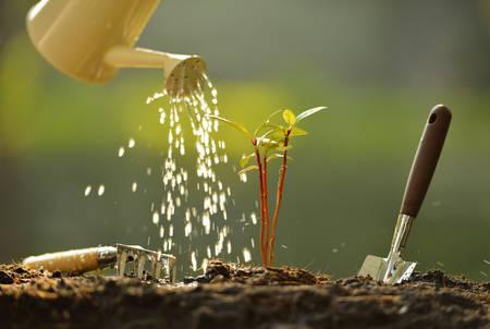 Sprossen aus einer Gießkanne bewässert