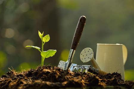 Jonge plant in de ochtend licht Stockfoto
